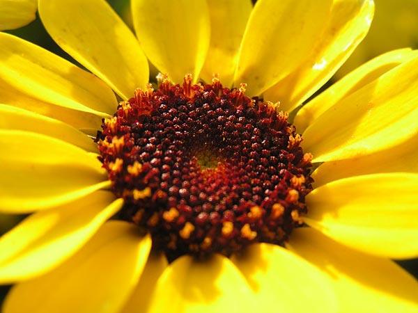 Vad är det för blomma