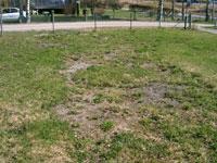 Söndergrävd gräsmatta