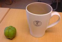 Rosenkvitten-frukt