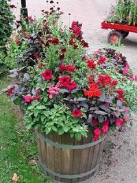 Plantering med olika sommarblommor i samma färg