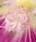 gallery_1455_369.jpg