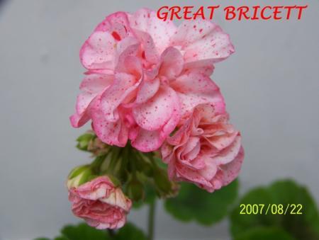 gallery_5074_2158_72720.jpg
