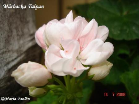 gallery_18075_2727_31239.jpg