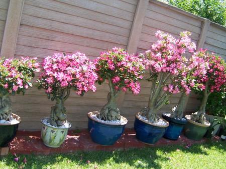 blommor som tål värme